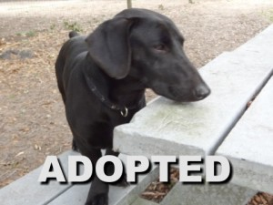 adopted male dachshund mix scrappydoo