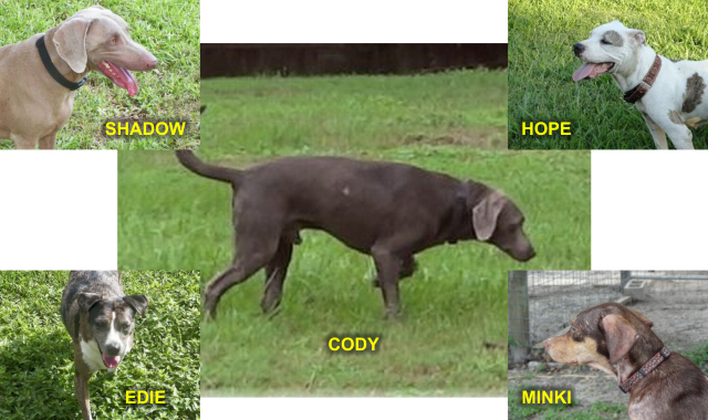 shadow, hope, minki, edie, cody collage