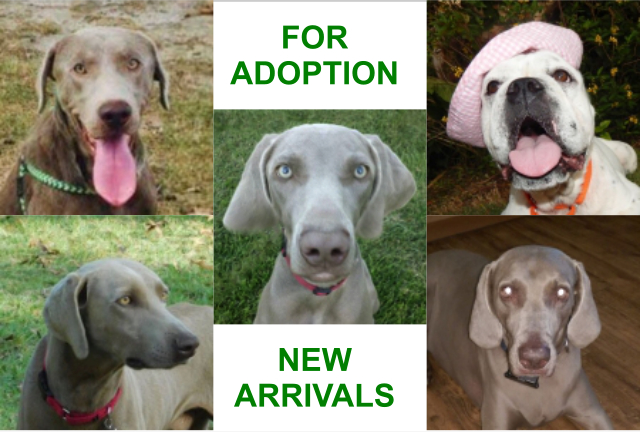 5 new dogs for adoption